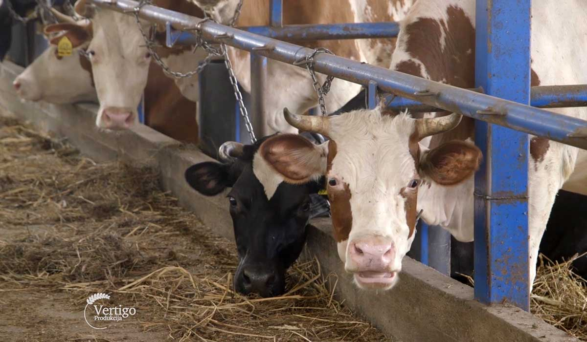 Agrosaveti - Proizvodnja mleka u selu Sanad 05