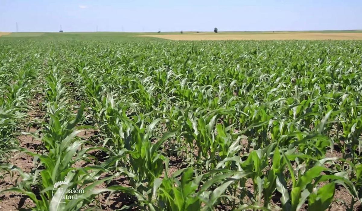 Agrosaveti - Ratarska proizvodnja u Padini 01