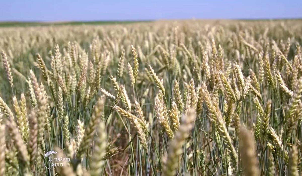 Agrosaveti - Ratarska proizvodnja u Padini 02