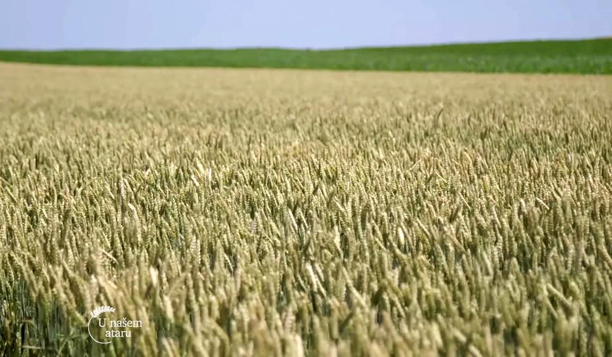 Agrosaveti - Ratarska proizvodnja u Padini 04