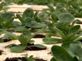 Agrosaveti - Raznovrsna organska proizvodnja 01