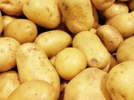 Agrosaveti - Rod krompira 02
