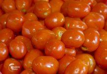 Agrosaveti - Sušenje jabuka i paradajza 02 (2)