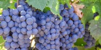 Agrosaveti - Vinogradarski registar 01