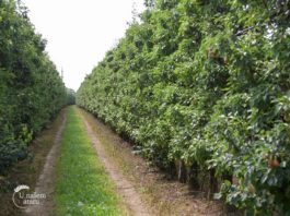 Agrosaveti - Voćarska proizvodnja u Brestoviku 01
