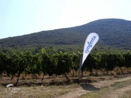 Agrosaveti - Zaštita vinove loze Syngenta 03