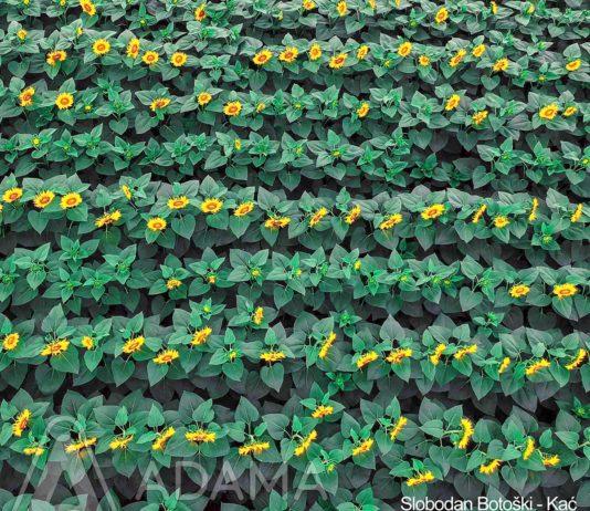 Agrosaveti---Adama---Slobodan-Botoski---Najlepsa-je-moja-njiva---nagradjena-fotografija