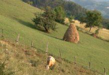 Agrosaveti - Anketa o strukturi poljoprivrednih gazdinstava 01