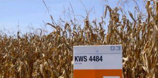 Agrosaveti - Dani polja kompanije KWS 01
