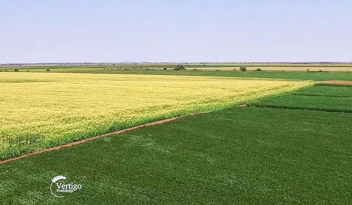 Agrosaveti - Dani polja kompanije KWS 07