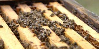 Agrosaveti - Izložba posvećena pčelama 01