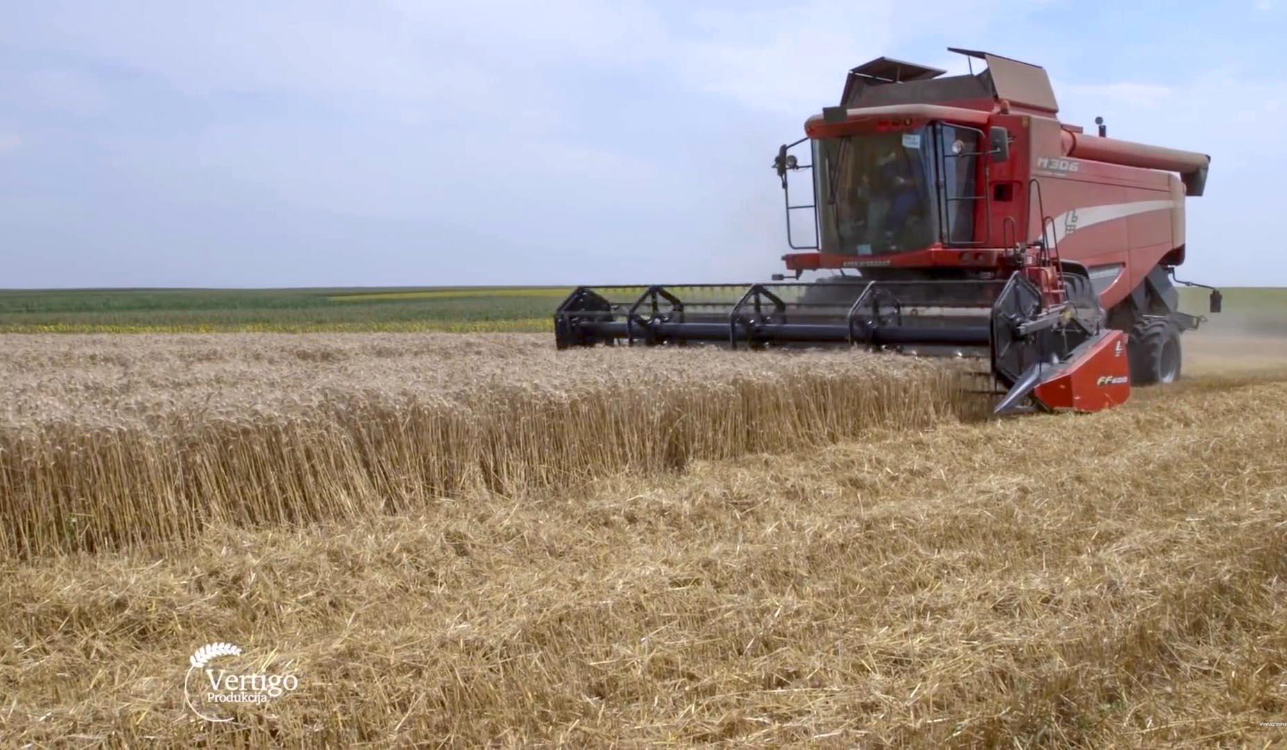 Agrosaveti - Izvoz srpske pšenice 01