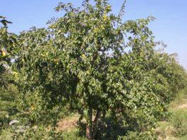 Agrosaveti - Kineske urme 06