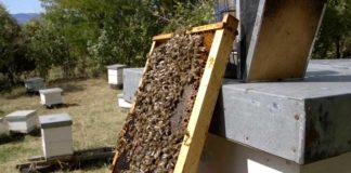 Agrosaveti - Majstor pčelarstva 02