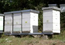 Agrosaveti - Majstor pčelarstva 06
