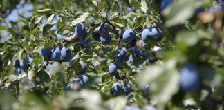 Agrosaveti - Organska poljoprivreda Teočin 01