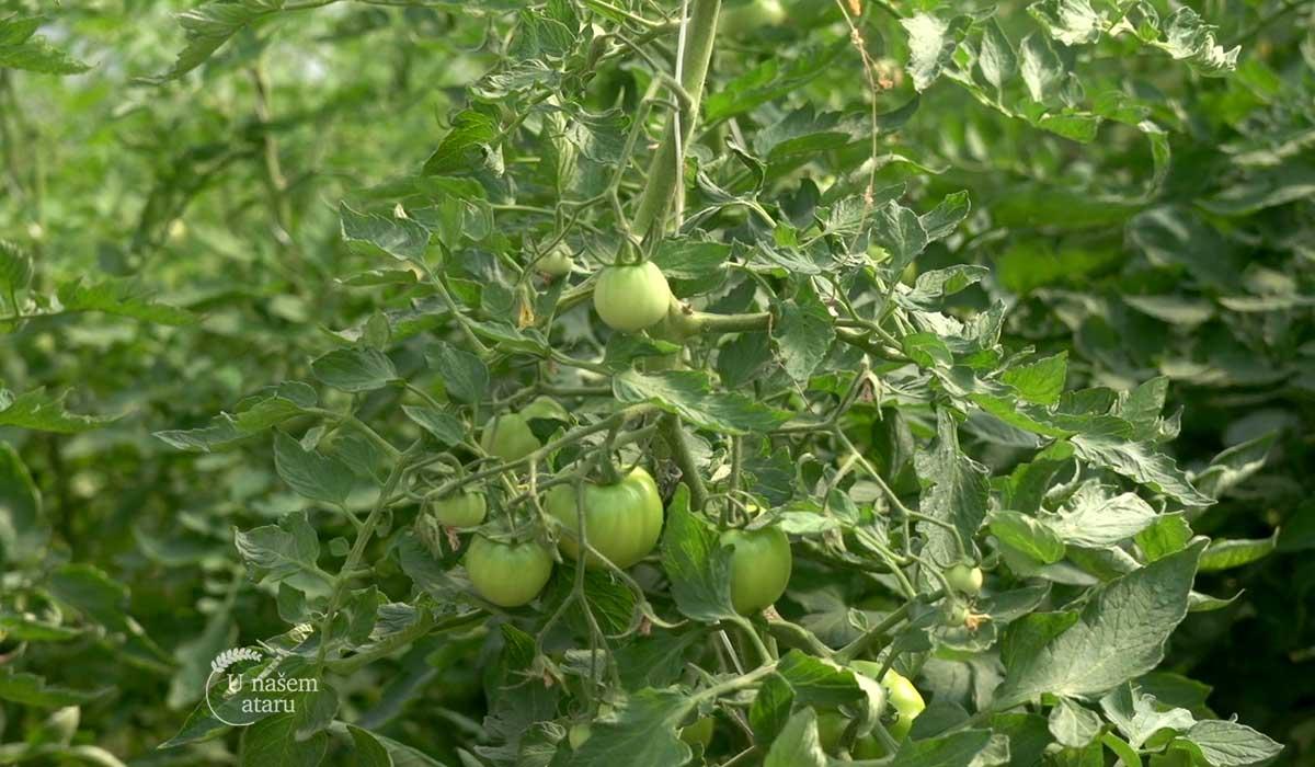 Agrosaveti - Organska poljoprivreda Teočin 03