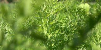 Agrosaveti - Organska poljoprivreda Teočin 05