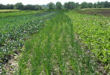 Agrosaveti - Organsko povrtarstvo u selu Gložan 06