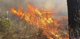 Agrosaveti - Požari u Vojvodini 01