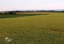 Agrosaveti - Precizna poljoprivreda u ratarstvu 04