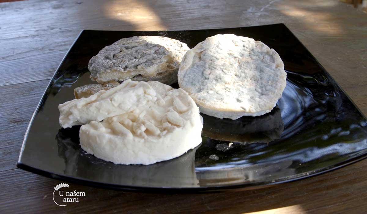 Agrosaveti - Proizvodnja delikatesnih kozjih sireva 09