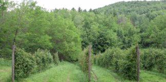 Agrosaveti - Proizvodnja malina i kupina u Podrinju 06