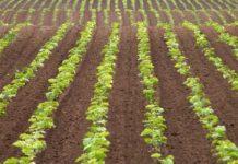 Agrosaveti - Sertifikacija u organskoj proizvodnji 01