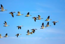 Agrosaveti - Sporazum o zaštiti migratornih ptica 02