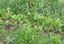 Agrosaveti - Tradicionalna i organska poljoprivreda 01
