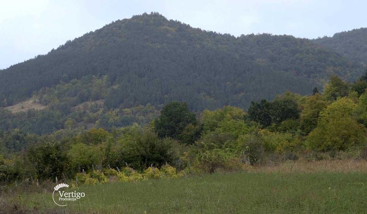 Agrosaveti - Uzgoj alpino koza na Staroj planini 09