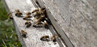 Agrosaveti - Uzgoj pčela u selu Gornja Kamenica 01