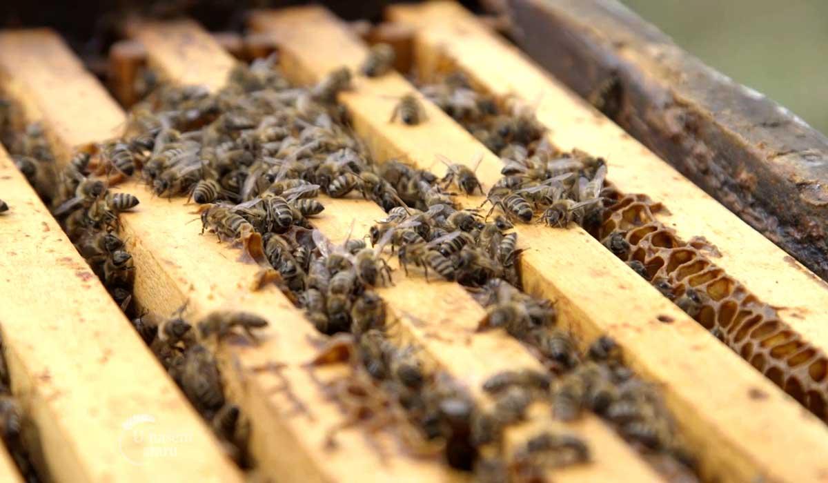Agrosaveti - Uzgoj pčela u selu Gornja Kamenica 04