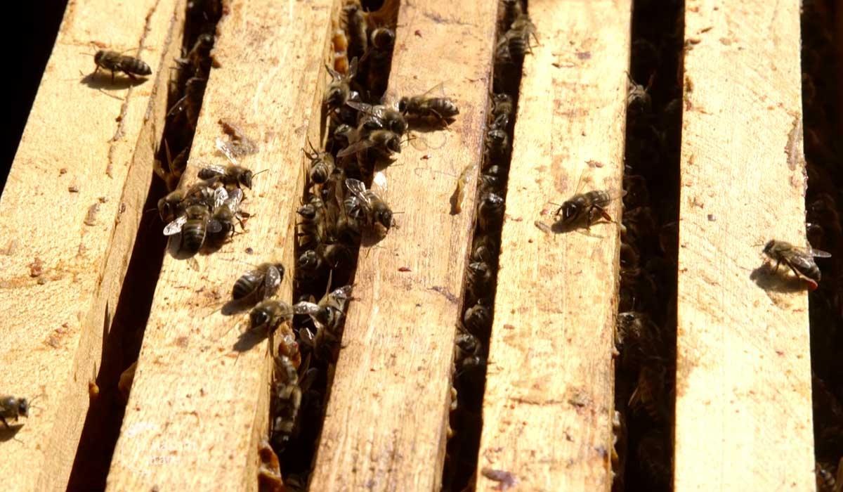 Agrosaveti - Uzgoj pčela u selu Gornja Kamenica 07