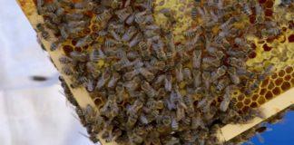 Agrosaveti - Uzgoj pčela u selu Kamendol 03