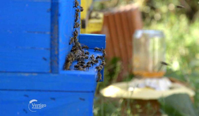 Agrosaveti - Uzgoj pčela u selu Kamendol 05