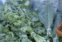 Agrosaveti - Zdrava hrana 04