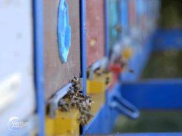 Agrosaveti - pčelarska proizvodnja u Bačkoj Topoli 01