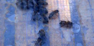 Agrosaveti - pčelarska proizvodnja u Bačkoj Topoli 03