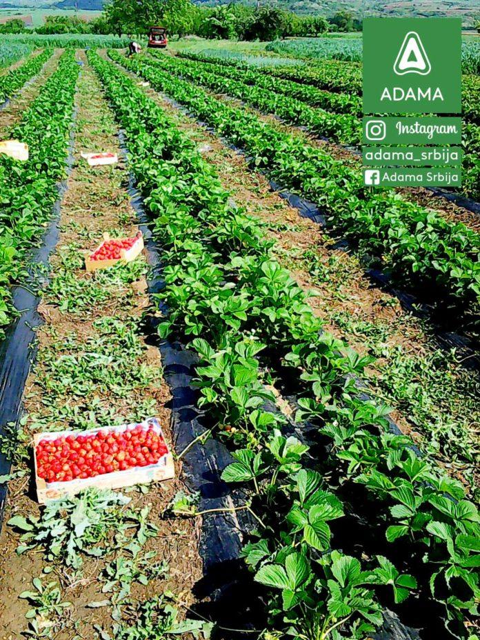 Agrosaveti--Adama---Goran-Djordjevic---Najlepsa-je-moja-njiva