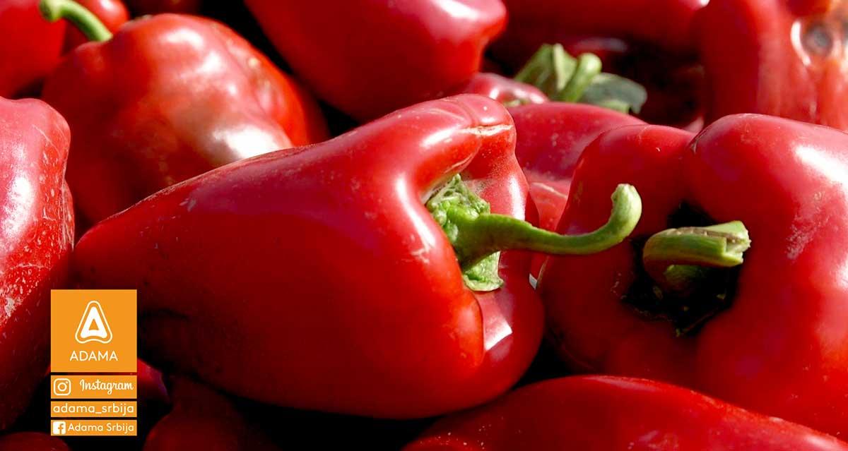 Agrosaveti---Adama---Paprika---Zacinska-paprika-02