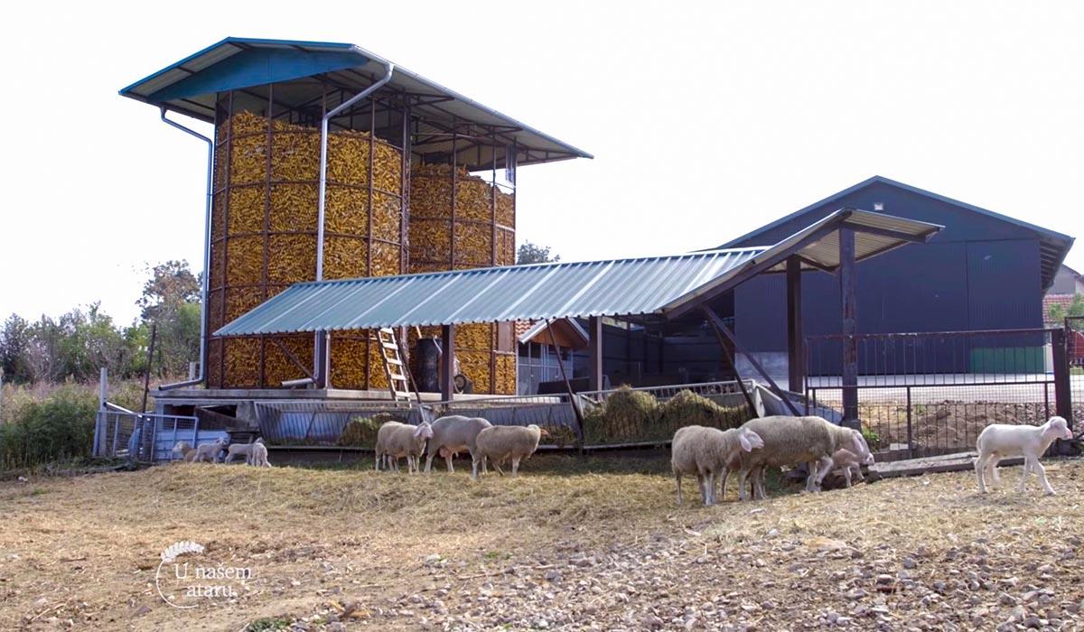Agrosaveti - Farma ovaca Donić iz Velike Plane 02