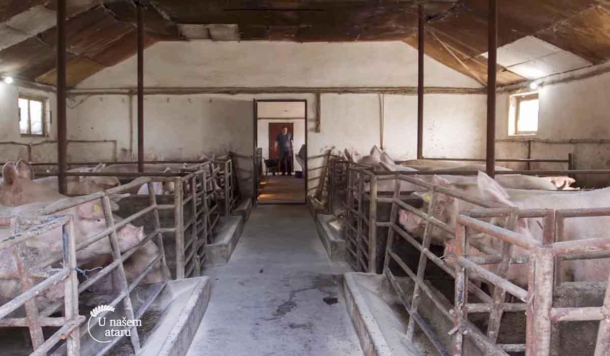 Agrosaveti - Farma svinja Donje Livadice 03
