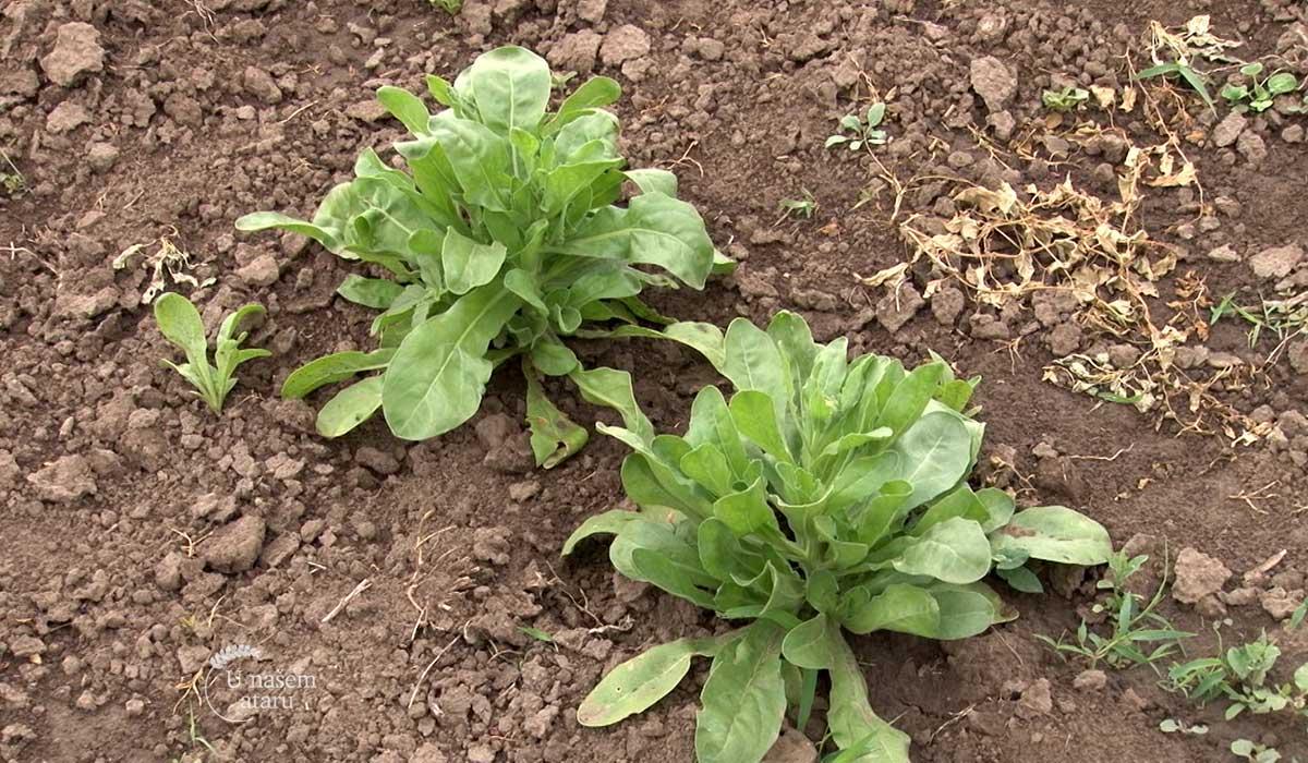 Agrosaveti - Istaživanje u organskoj poljoprivredi 01