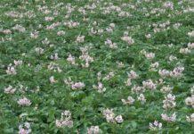 Agrosaveti - Istaživanje u organskoj poljoprivredi 02