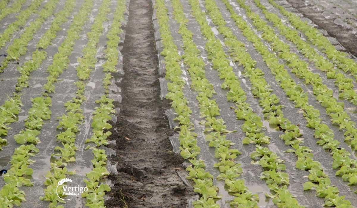 Agrosaveti - Organska proizvodnja povrća 01