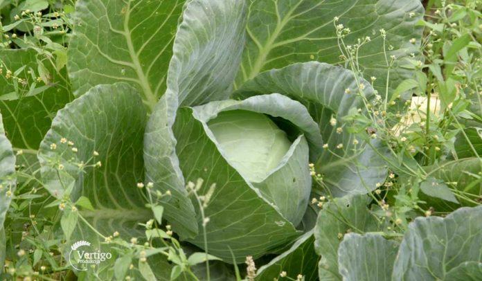 Agrosaveti - Organska proizvodnja u Pivnicama 01