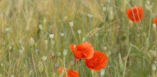 Agrosaveti - Prerada i plasman organskih proizvoda 01