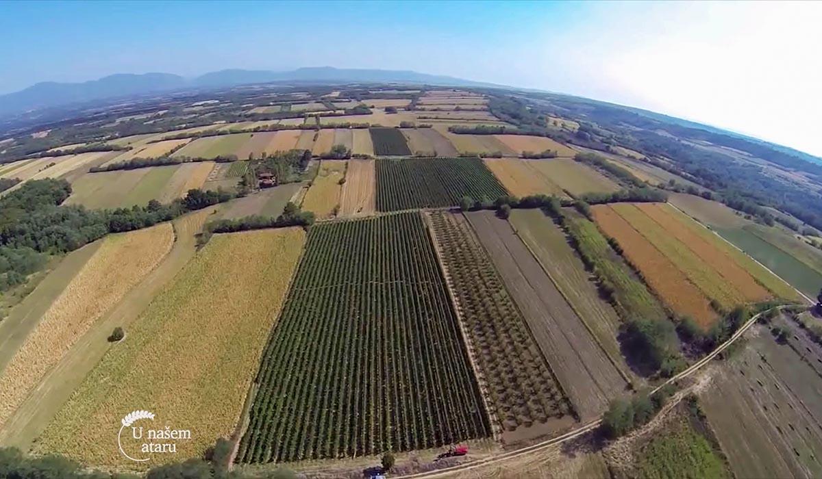 Agrosaveti - Proizvodnja vina u selu Lopušnik 07