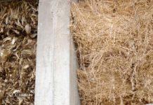 Agrosaveti - Ratarska proizvodnja u selu Kasidol 03